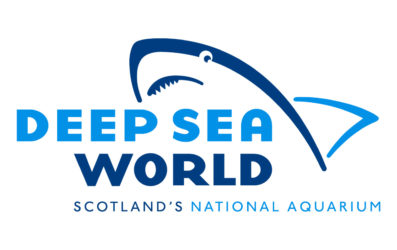 Deep Sea World: un paseo entre tiburones